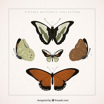 Varias mariposas retro dibujadas a mano