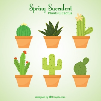 Variedad de cactus para decoración
