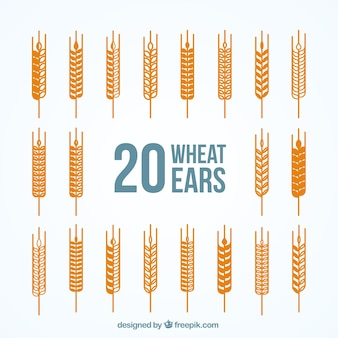 Variedad de espigas de trigo