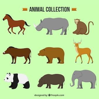 Varios animales decorativos en diseño plano