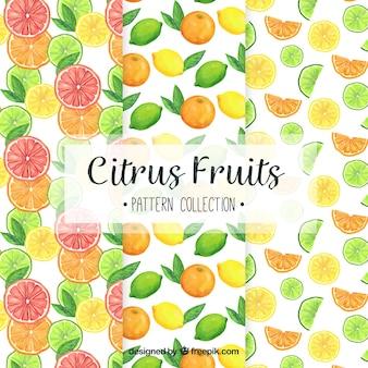 Varios patrones de fruta de acuarela