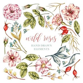Wild rose flores elementos
