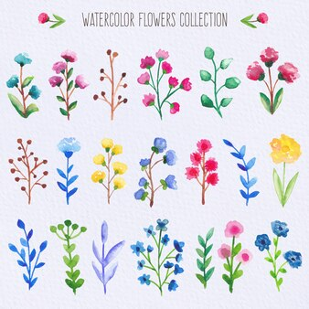 Aquarell Blumen Sammlung