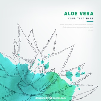 Aquarell Fleck Hintergrund mit Aloe Vera Skizze