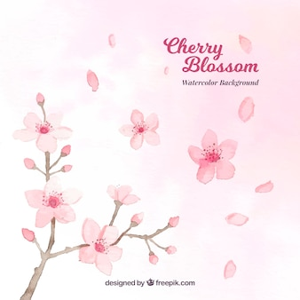 Aquarell Kirschblüte Hintergrund