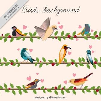 Aquarell Vögel mit Blättern Hintergrund