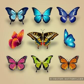 Ausgezeichnete Sammlung von Schmetterlingen