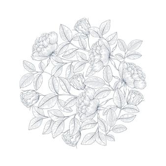 Dekorative englische Gartenrose