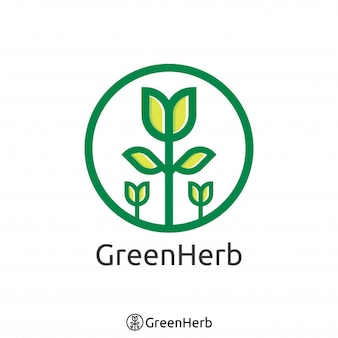 Einfaches grünes Baumlogo. Bio-Kräuter-Logo-Konzept. Vektor-Illustration.