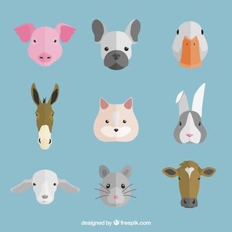 Flache Auswahl an dekorativen Tiere Gesichter