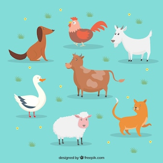Flaches Set von niedlichen Nutztieren