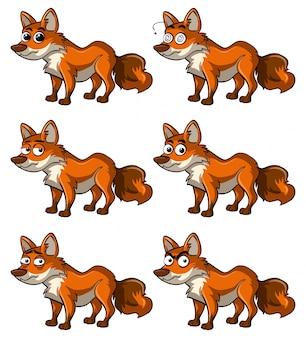 Fuchs mit verschiedenen Mimik