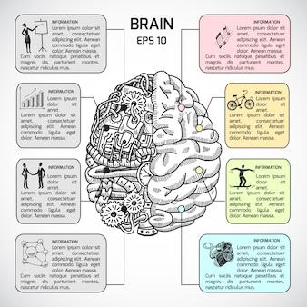 Gehirn hemisphären Skizze infografisch