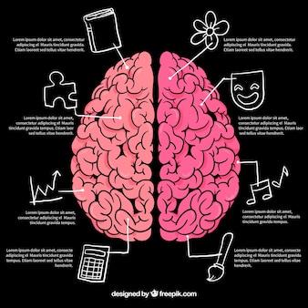Gehirn Infografiken mit Zeichnungen