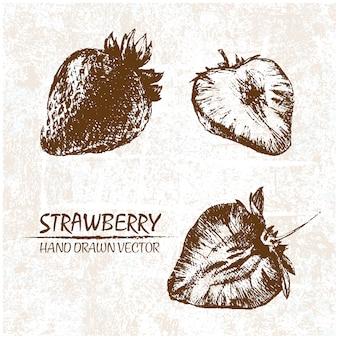 Hand gezeichnet Erdbeeren Design