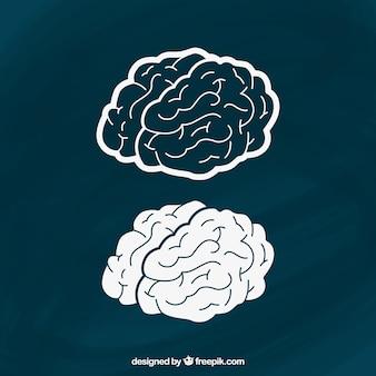 Hand gezeichnet Gehirne