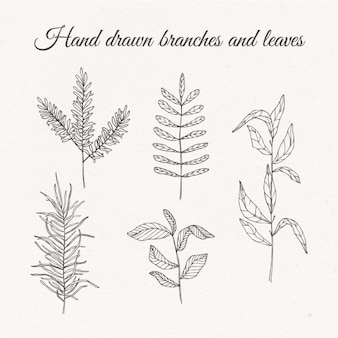 Hand gezeichnet Zweige und Blätter