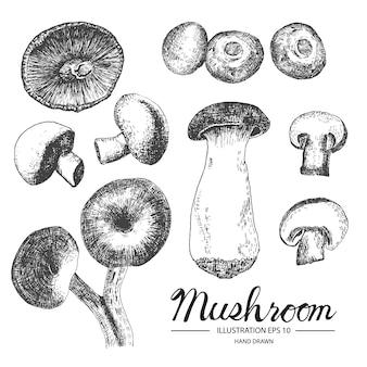 Handgezeichnete Pilze Sammlung