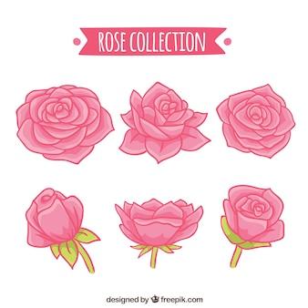 Handgezeichnete Sammlung von sechs Rosen