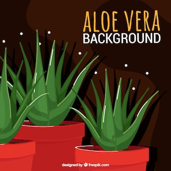 Hintergrund der schönen Töpfe von Aloe Vera