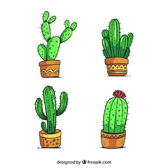 Kaktus-Set