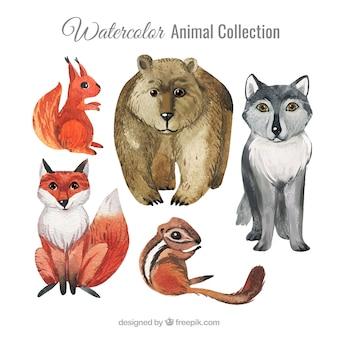Klassische Sammlung von Aquarelltieren