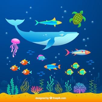 Meerestiere