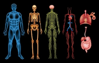 Menschliche Körpersysteme