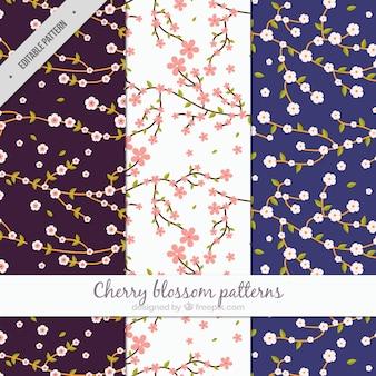 Muster der Zweige mit Kirschblüten