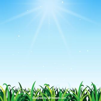 Natürlicher Hintergrund mit Gras im realistischen Design