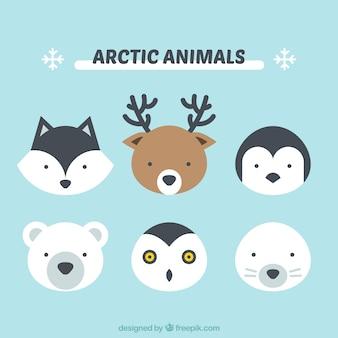 Nette arktische Tiere