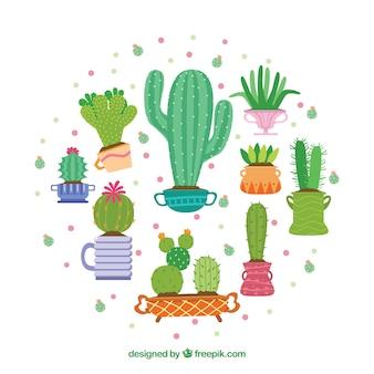 Nette Kaktus-Sammlung