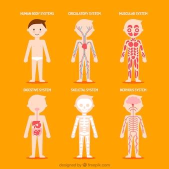 Nizza menschlichen Körper Systeme