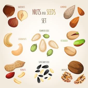 Nüsse und Samen gesetzt