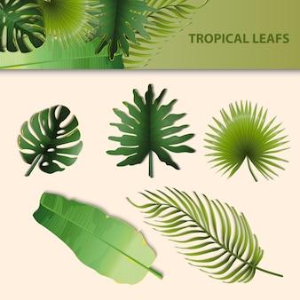 Palme Blätter Sammlung