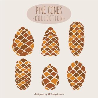 Pine Cone-Sammlung