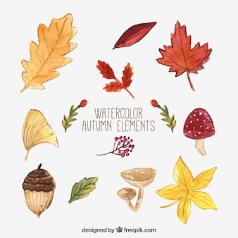 Sammlung von natürlichen Element der Herbst Aquarell
