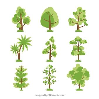 Sammlung von schönen grünen Bäumen