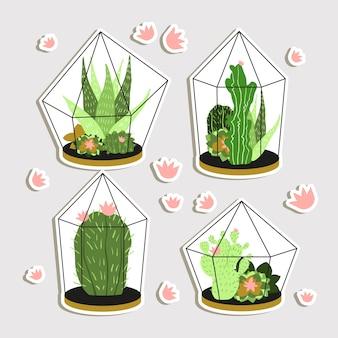 Schöne Kaktus-Kollektion