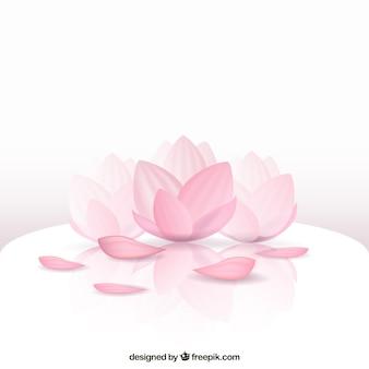 Schöne Lotusblüte