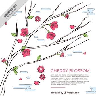 Schöner Hintergrund der Kirschblüte