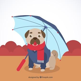 Schöner Mops mit Regenschirm und Mantel