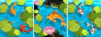 Serie tropischen Satz Stream Wildlife