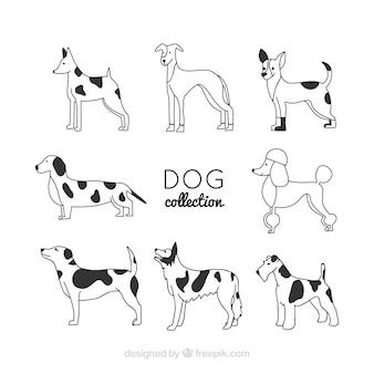 Set von acht linearen Hunden