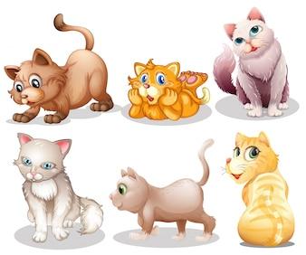 Spielerische Katzen