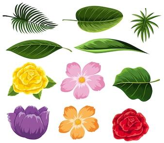 Verschiedene Arten von Blättern und Blumen