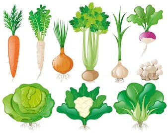 Verschiedene Arten von Gemüse