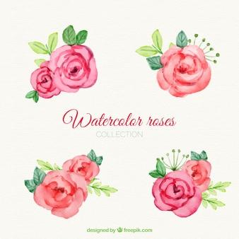 Vielzahl von Rosen mit Aquarell gemalt