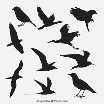 Vogel-Silhouetten packen