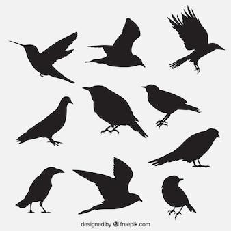 Vogel umreißt Sammlung